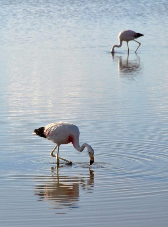 Flamingo spotting at Laguna Chaxa