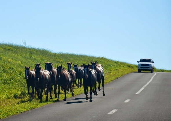 Heading north to the coast, but watch out for horses, wild or herded