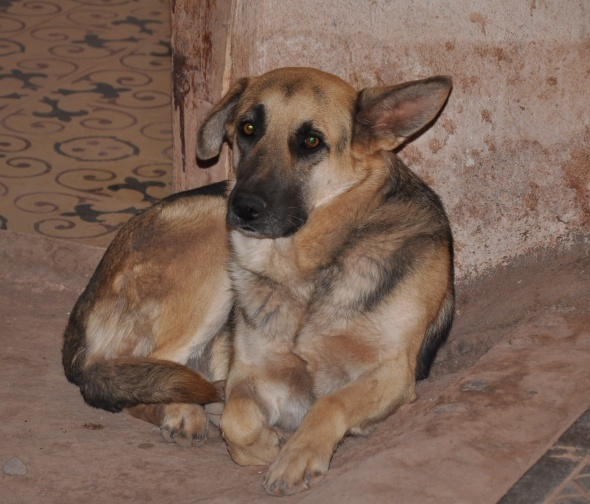 One of the dogs that gives the village its nickname - San Perro de Atacama