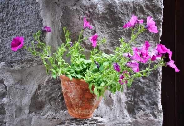 A splash of colour on a wall in Corniglia