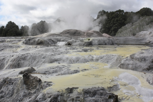 Mud pools and steam, Rotorua