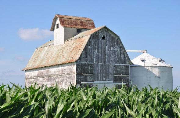 Cornfields surround Hammond, IL