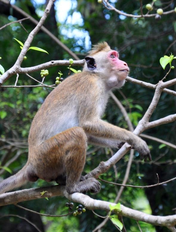Monkeys make their home at the foot, near Cobra Rock