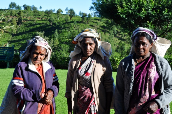 Tea pickers off to work