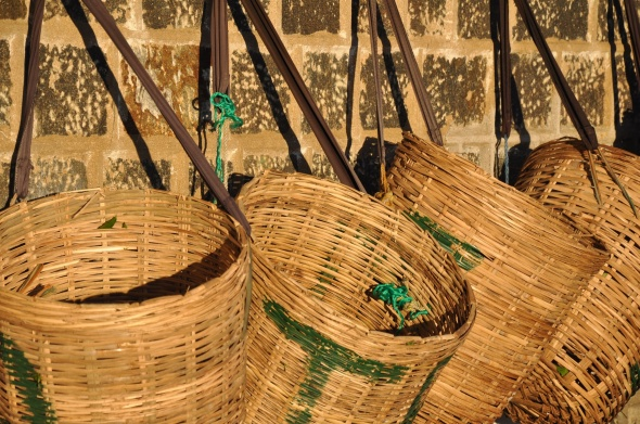 The basket for collecting leaves