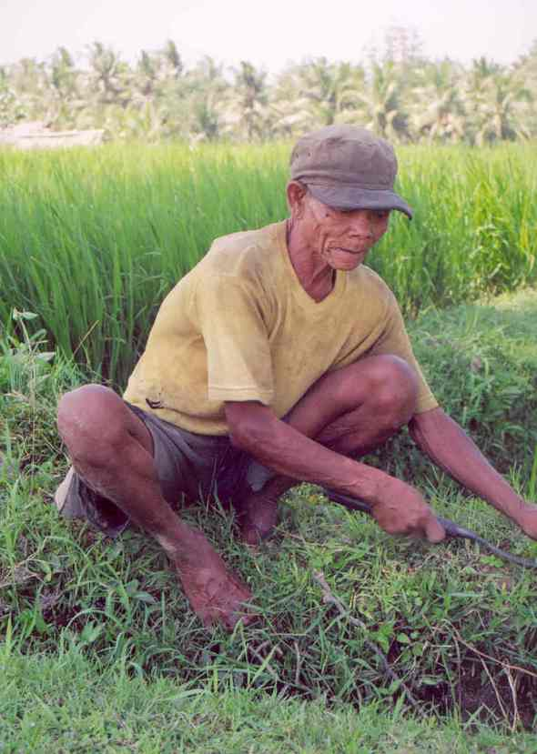 indonesia-working-in-balis-rice-fields