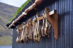 Kingfish drying at the hjallur – Copy