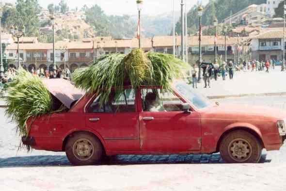 Peru Time to feed the llamas in Cusco