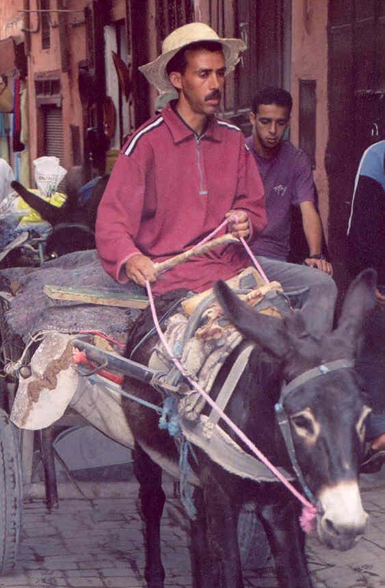 Morocco donkey cart